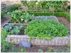 potager permaculture