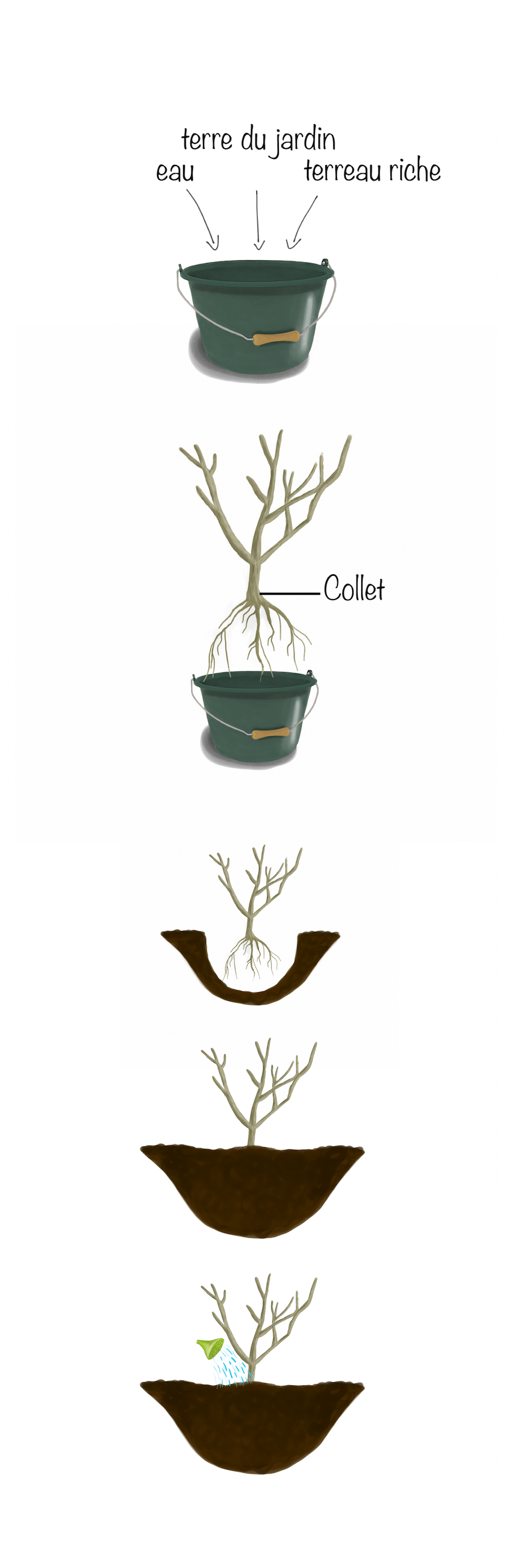 comment planter selon les diff rentes sortes de plantes fiche jardinage greenastic. Black Bedroom Furniture Sets. Home Design Ideas