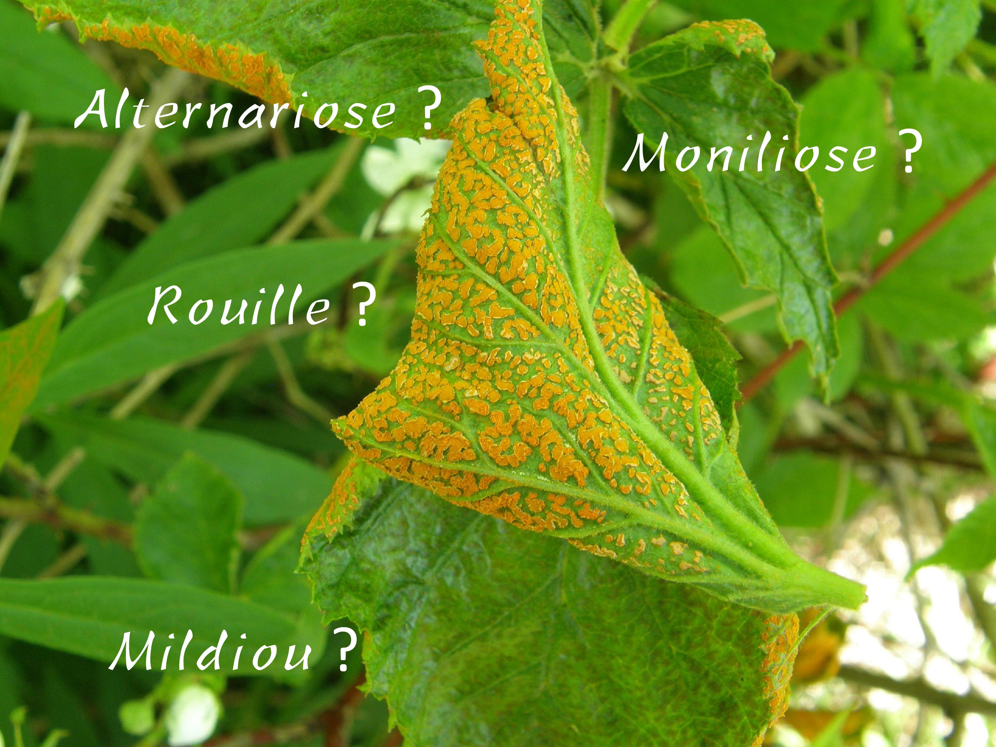 identification plante en ligne