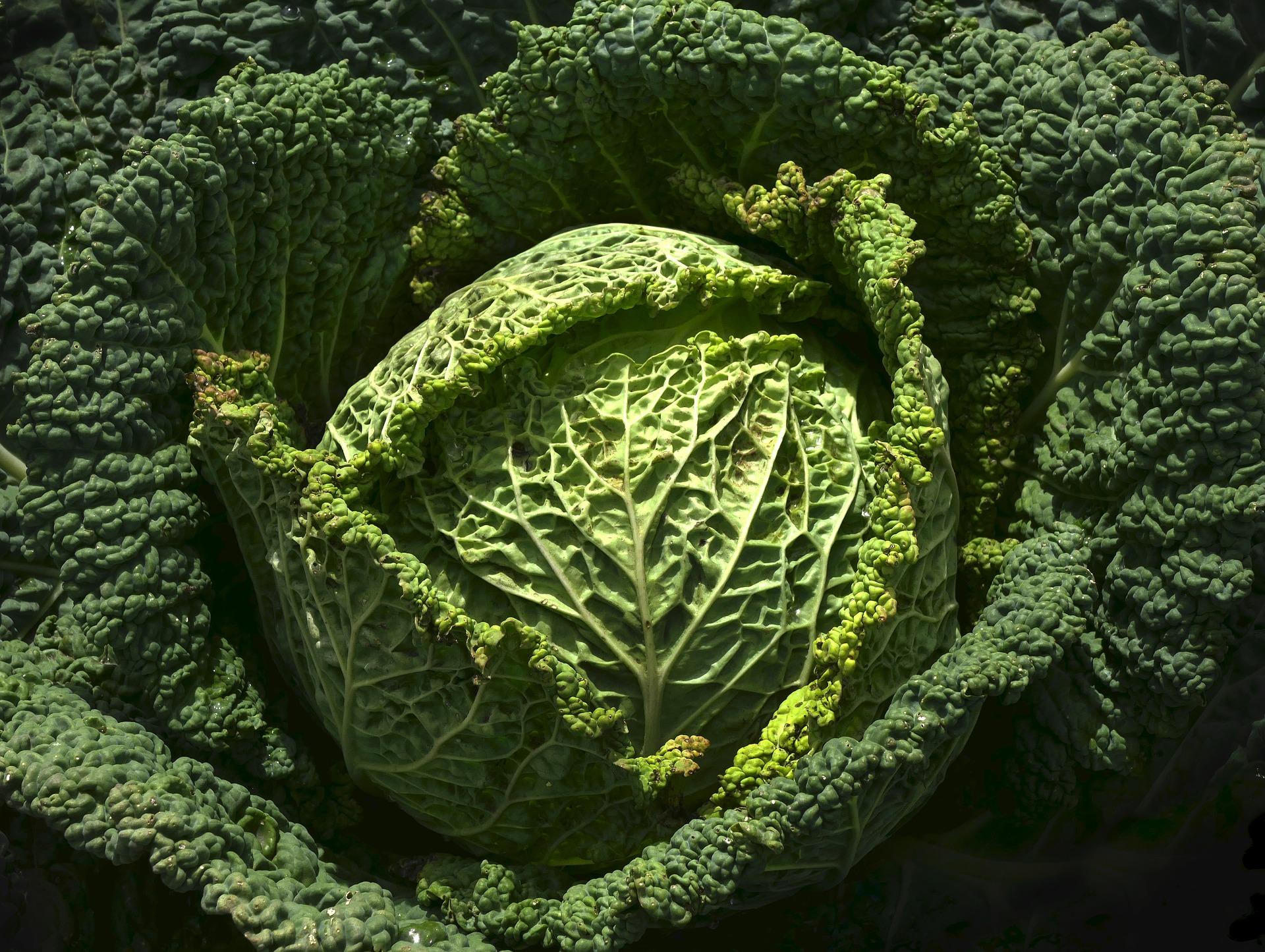 Que faire en septembre au jardin fiche jardinage greenastic - Que faire au jardin en septembre ...