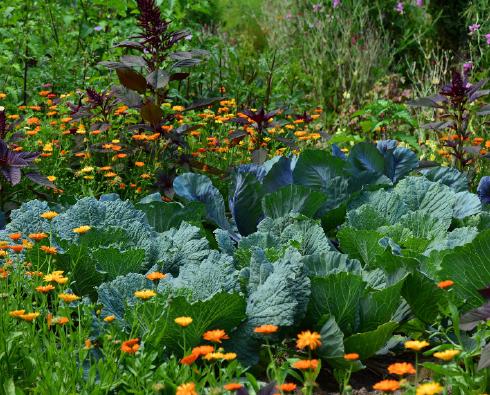 jardin_permaculture