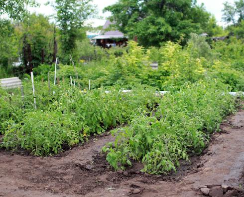jardin_potager