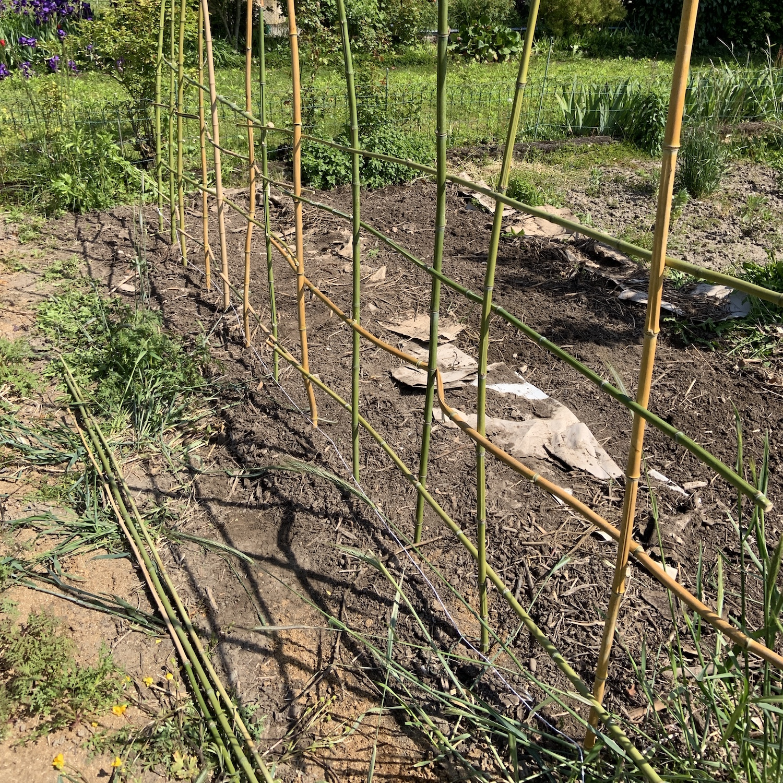Faire Une Palissade Avec Des Branches comment construire un tipi ou une palissade pour cultiver
