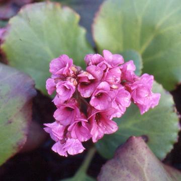 Catalogue arbustes floraison hivernale greenastic - Arbuste a floraison hivernale ...