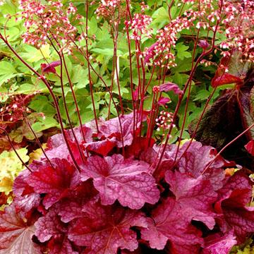Catalogue plantes vivaces page 41 sur 94 greenastic for Catalogue plantes vivaces